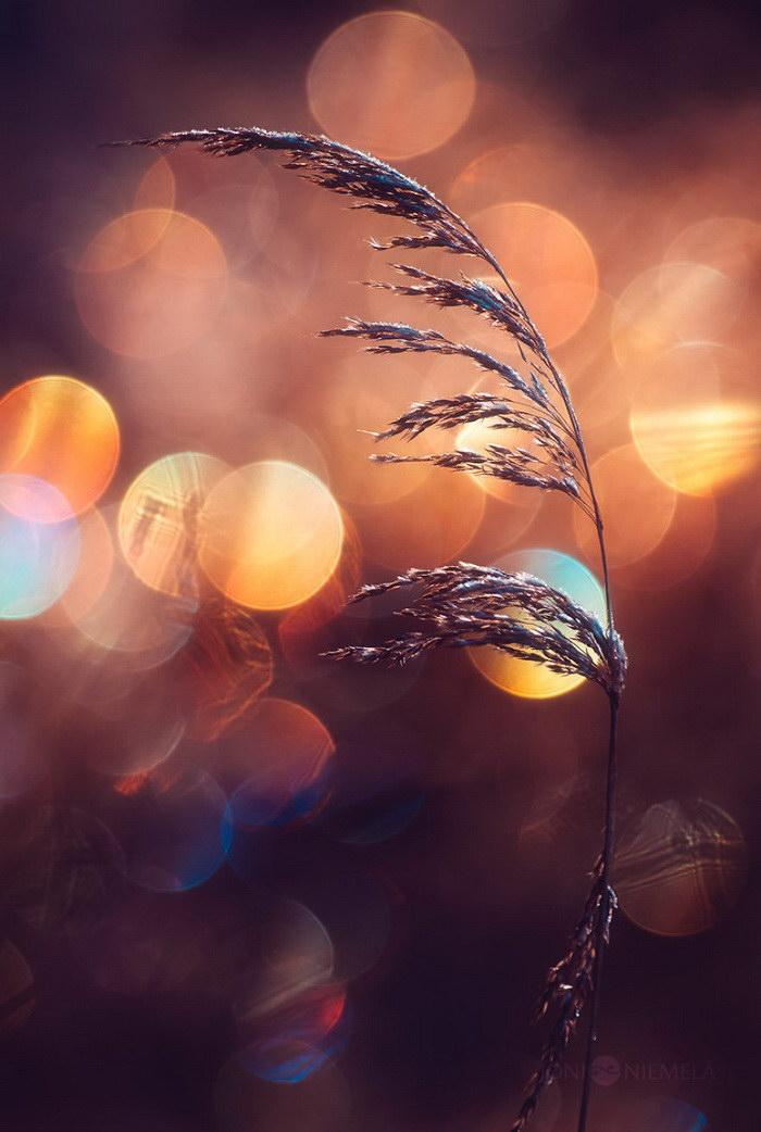 Красивое боке в снимках Joni Niemel?