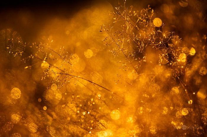 Красивое боке в снимках Joni Niemelä