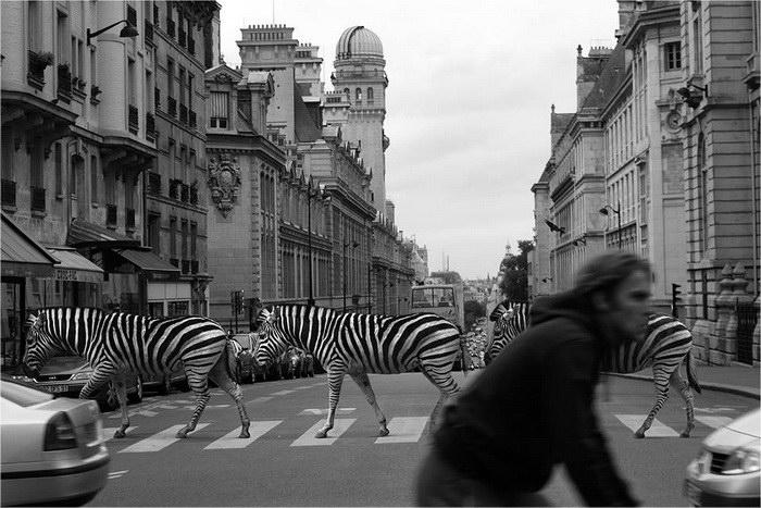 Животные в городе: проект Ceslovas Cesnakevicius