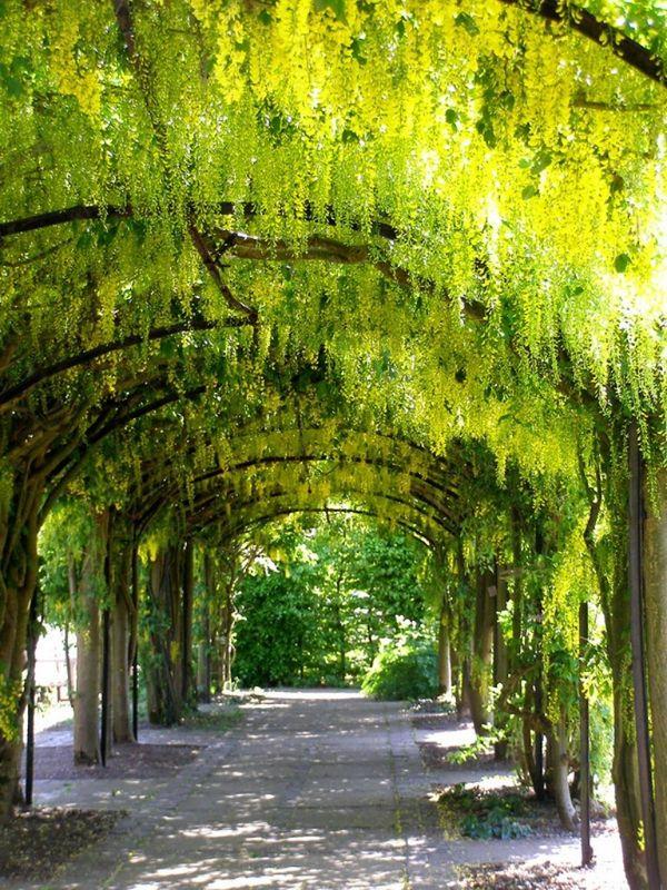 Туннели из лабурнума