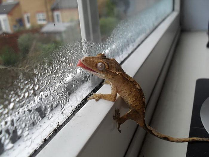 20 животных, облизывающих стекло и выглядящих при этом крайне забавно