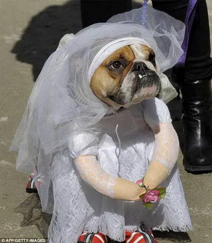 Свадьбы среди животных