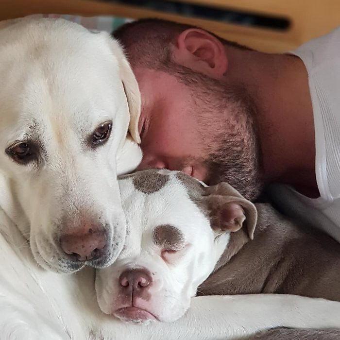 Самая грустная собака на планете