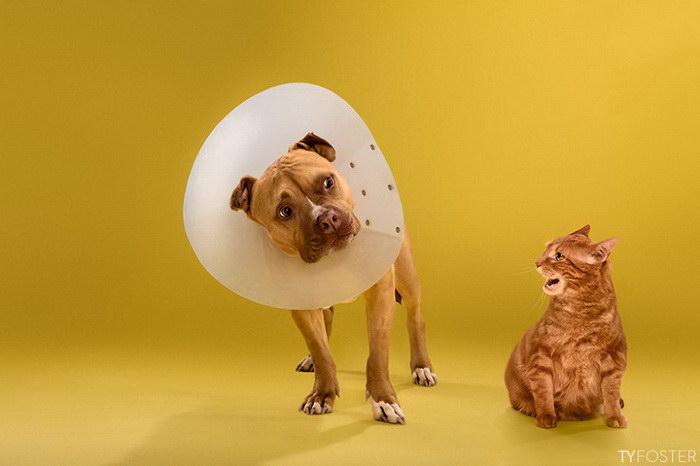 14 наказанных собак в воротниках