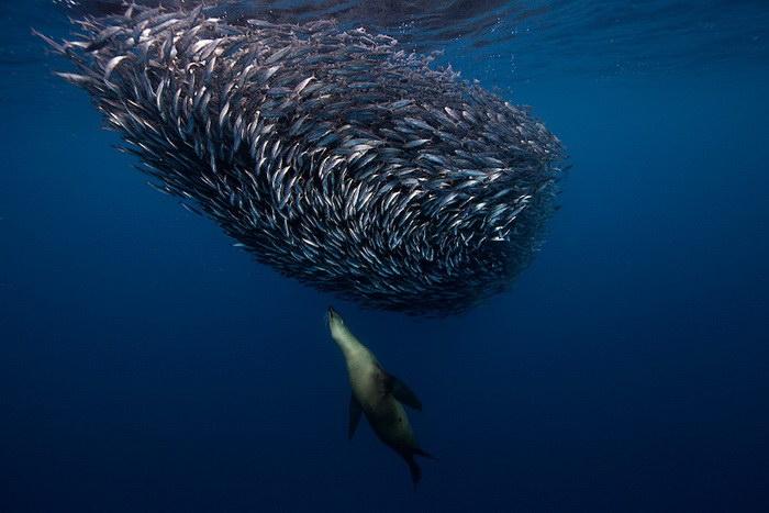 Подводные фотографии Jorge Cervera Hauser