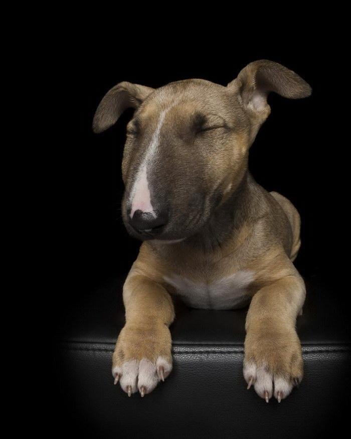 Релаксирующие собаки в фотографиях Alex Cearns