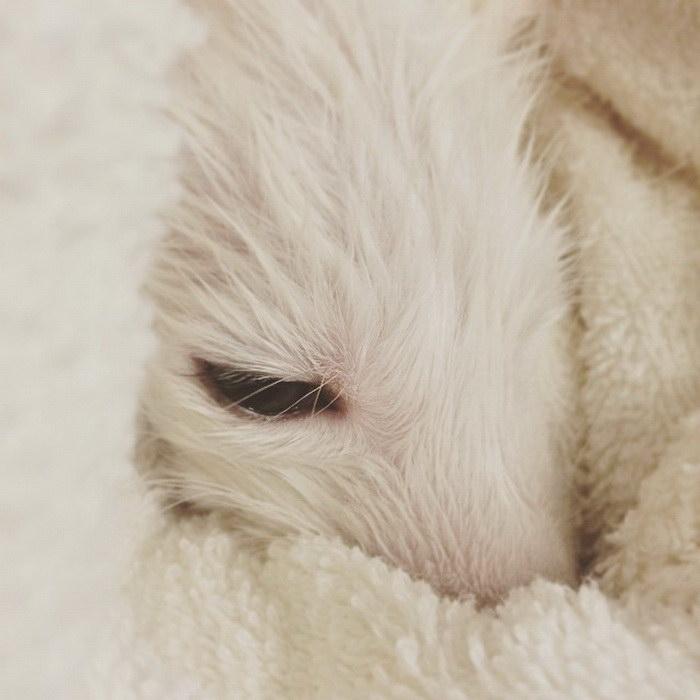 Самая милая лисичка на свете по имени Rylai