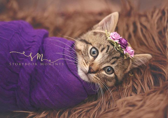 «Новорожденная» фотосессия котенка Cassie Borcherding