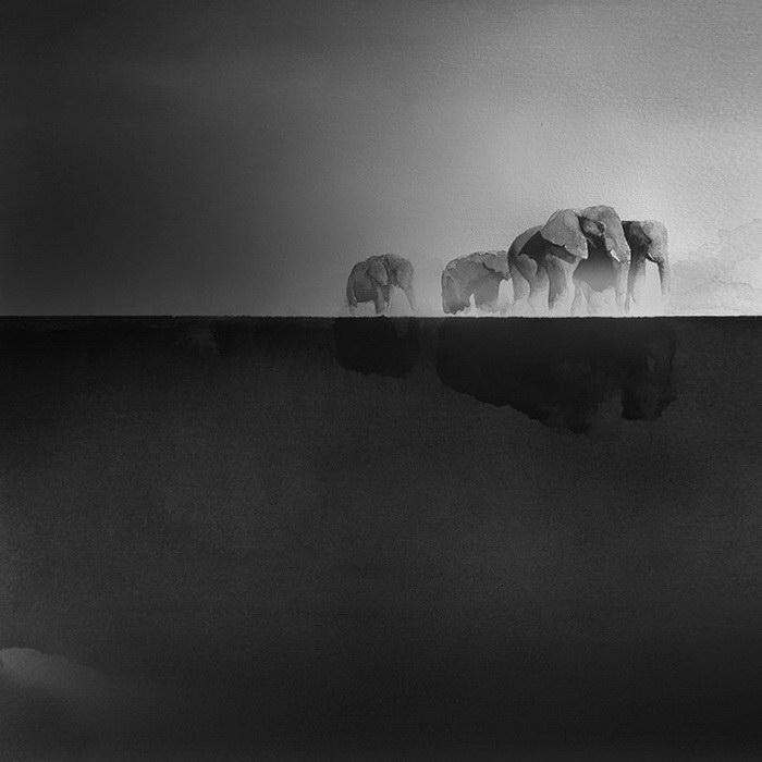 Черно-белые акварели Elicia Edijanto