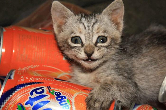 20 улыбающихся кошек, которые подарят вам прекрасное настроение