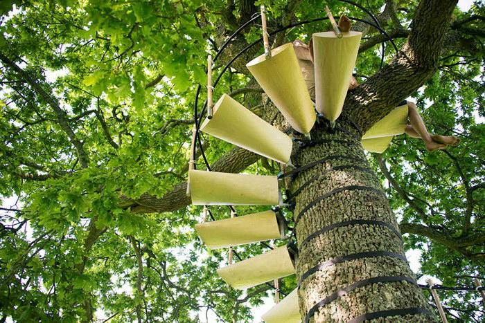 Переносная лестница, с помощью которой можно забраться на любое дерево