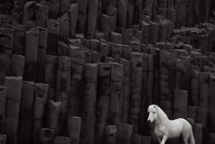 Исландские лошади в фотографиях Drew Doggett