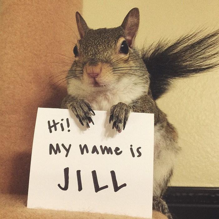 Смешная белка по имени Джилл