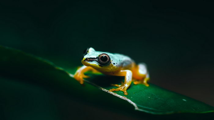 Животные Мадагаскара в снимках Ben Simon Rehn