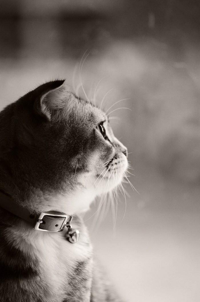 Котенок по имени Юми: фотографии Cheng Yi