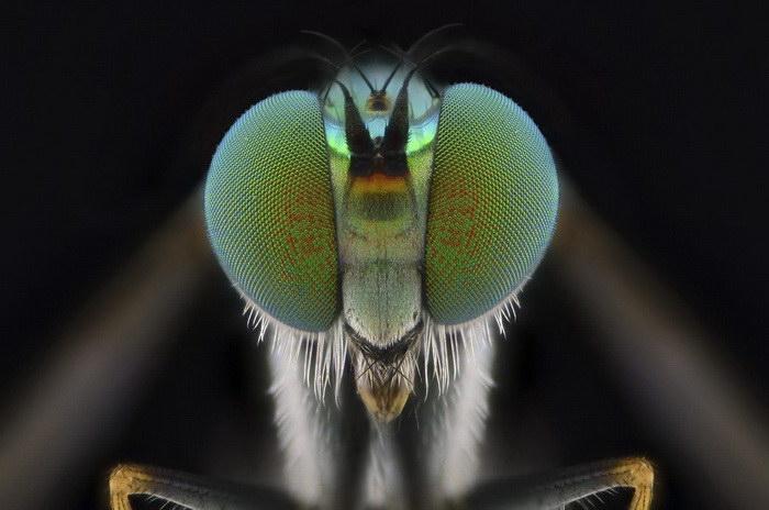 Мир насекомых в фотографиях Yudy Sauw