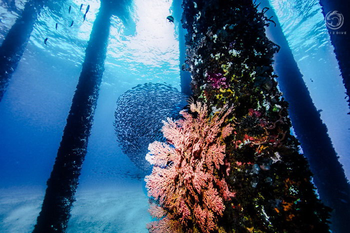 Подводный лес на Бали в фотографиях Lukas Szolc-Nartowski
