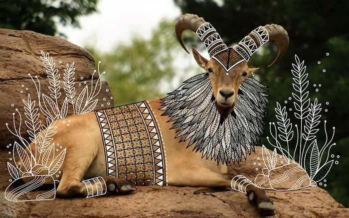 Разукрашенные животные Rohan Sharad Dahotre