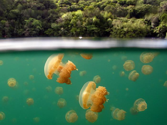 20 фотографий, сделанных между водой и воздухом