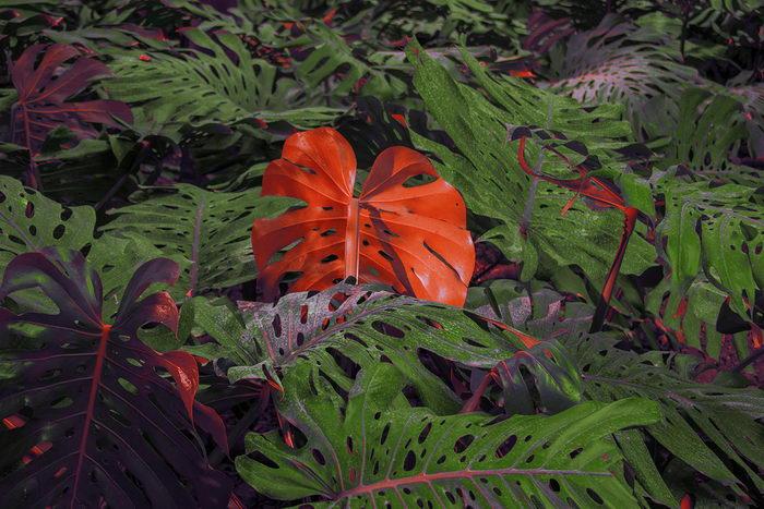 Странные листья на фотографиях Al Mefer