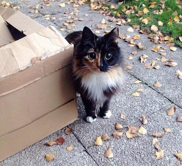 Слепая кошка Жасмин и ее удивительные глаза