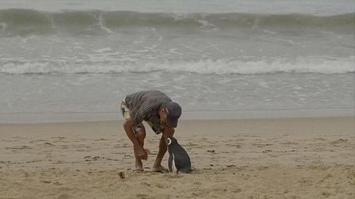 Невероятная дружба пингвина и мужчины из Бразилии