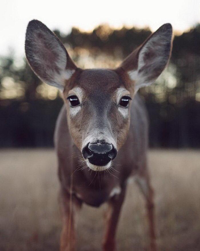 Дикие, но ручные животные Valerie Derome-Masse