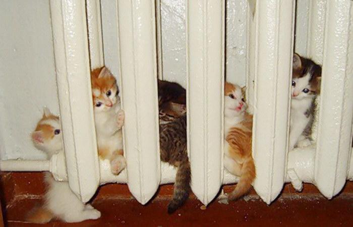 25 животных, которые обожают тепло