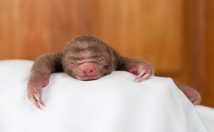 Центр реабилитации ленивцев: уникальное заведение в Коста-Рике