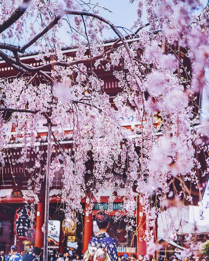 Цветущая Япония в фотографиях Кристины Макеевой