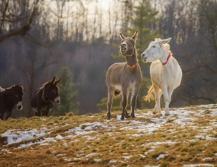 Фотографии очаровательных осликов Rachele Totaro