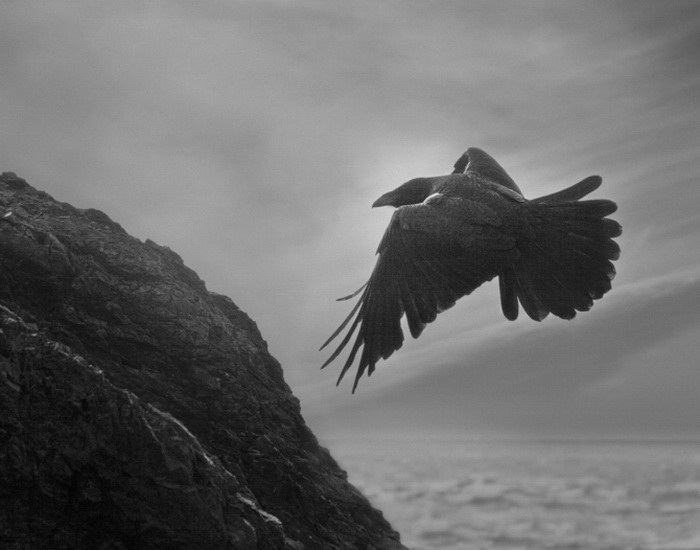 Вороны в фотографиях Beth Moon