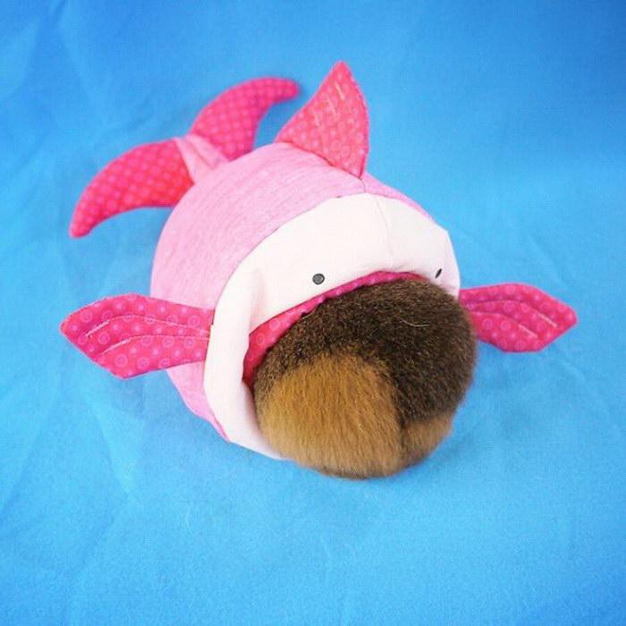 Морская свинка-косплеер и ее невероятные костюмы