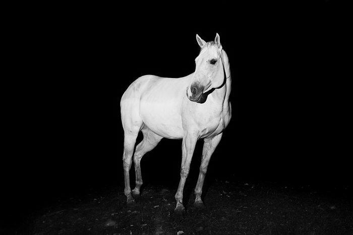 Фотографии животных Troy Moth