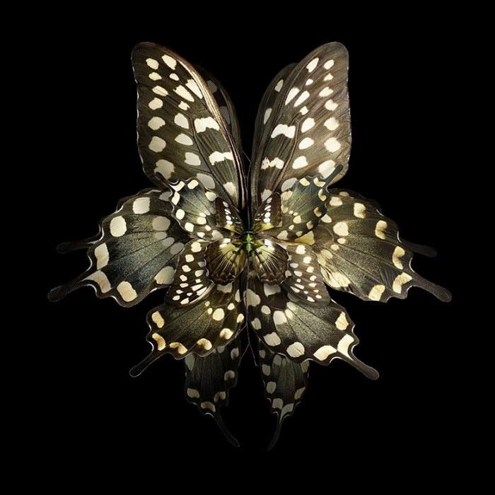Крылья насекомых как лепестки цветов: фото Seb Janiak