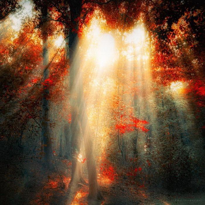 Роскошный осенний лес в фотографиях Ildiko Neer