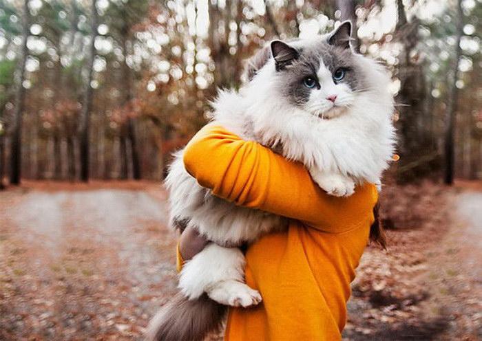 20 самых пушистых кошек на Земле