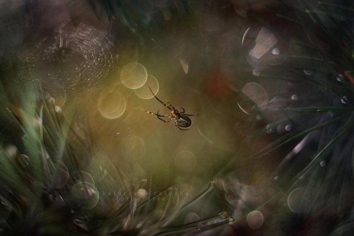 Нежная природа средней полосы в снимках Katarzyna Zaluzna