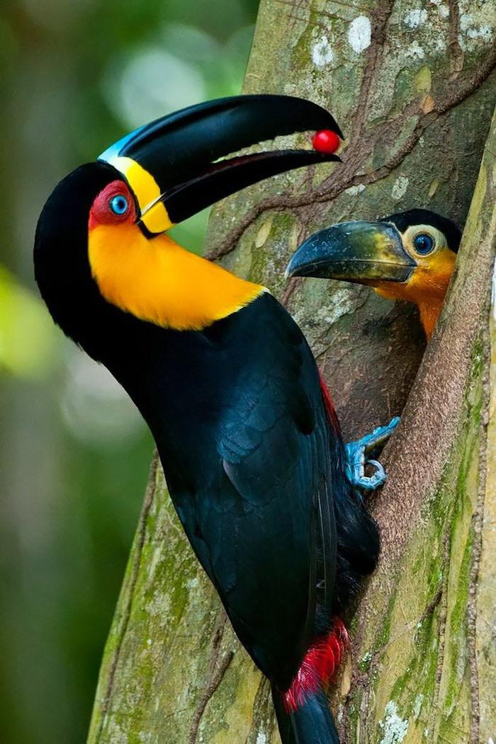 20 фотографий мамочек-птиц рядом с их детками