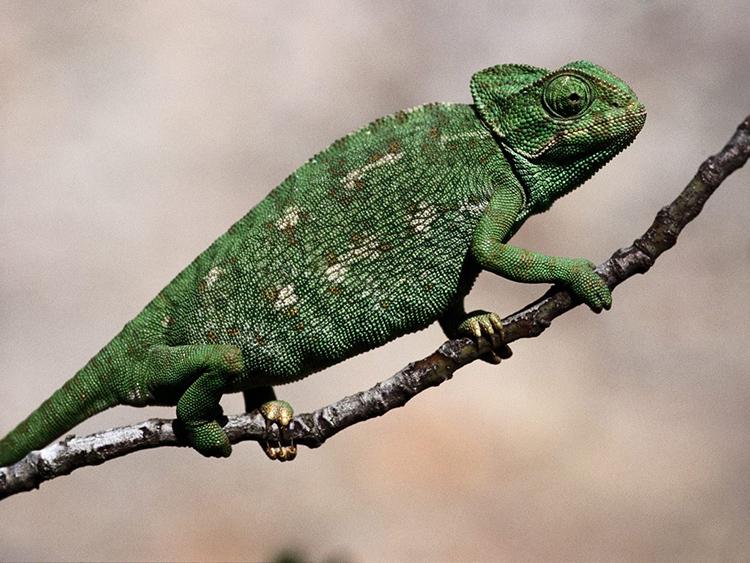 Экзотические животные  и описание