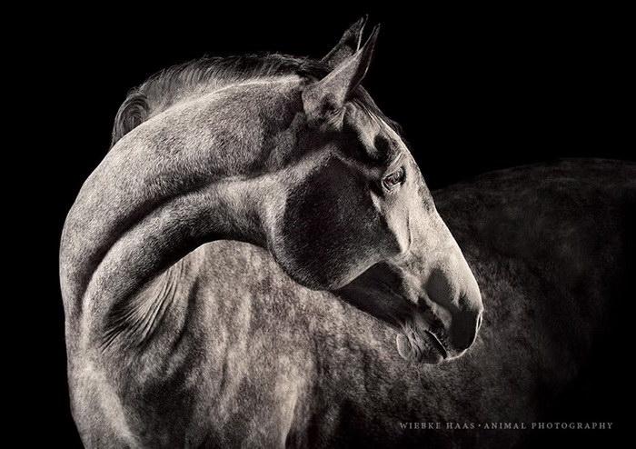 Лошадиный фотограф Wiebke Haas