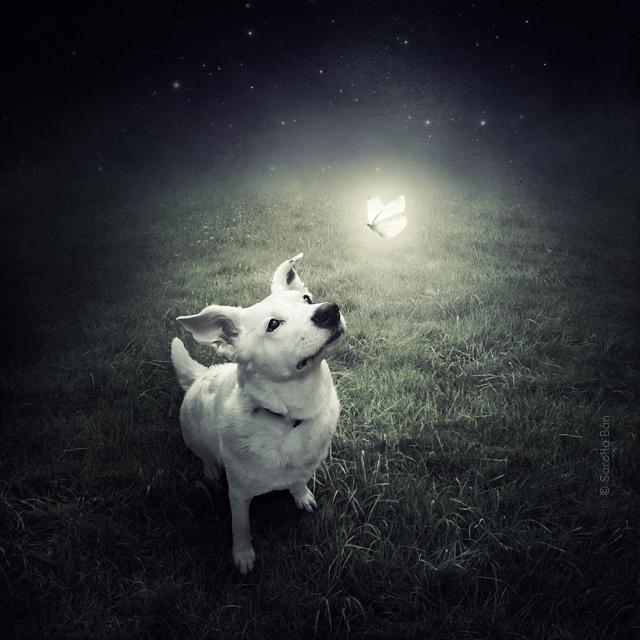 Венгерский фотограф помогает найти собакам новый дом