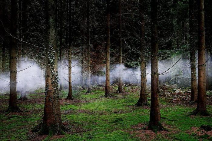 Лучшие работы конкурса Smithsonian Photo Competition 2015