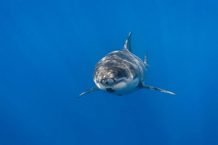 Акулы в фотографиях George Probst