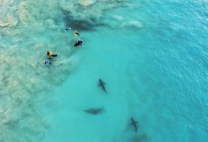 Акулы на побережье Австралии в снимках Sean Scott