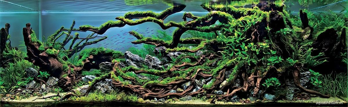 Самые красивые аквариумы
