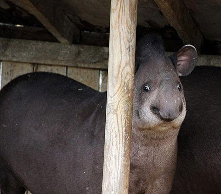 Дурацкие фотографии животных
