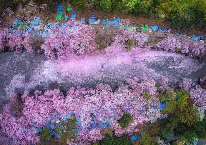 Цветущая Япония в фотографиях Danilo Dungo