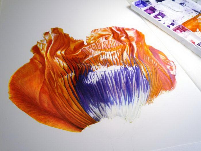 Эволюция мака в иллюстрациях Denise Ramsay