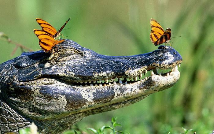 Бабочки на черепахах в фотографиях Julija Televičiūtė